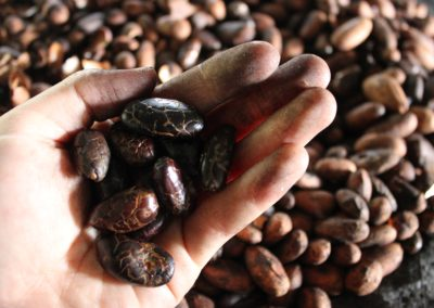 naked cacao seeds